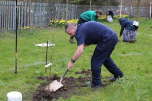 Orchard Project - Volunteers planting a tree
