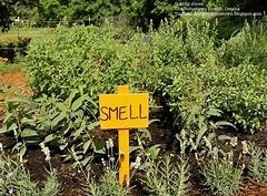 Plants with a smell sign