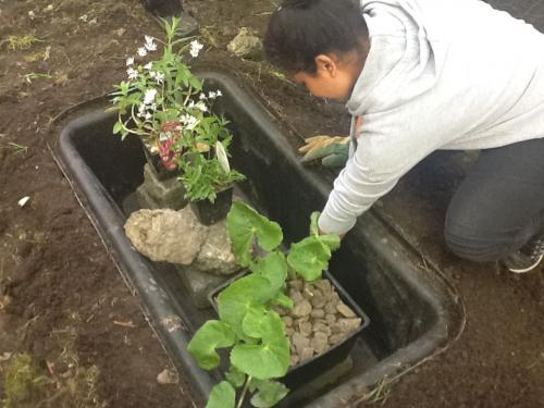 Planting up for the mini pond