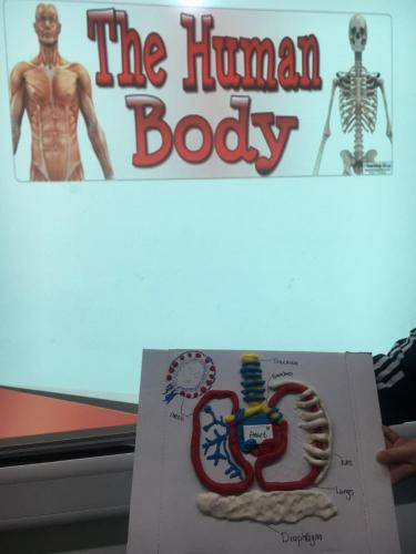 Diagram and presentation for The Human Body unit