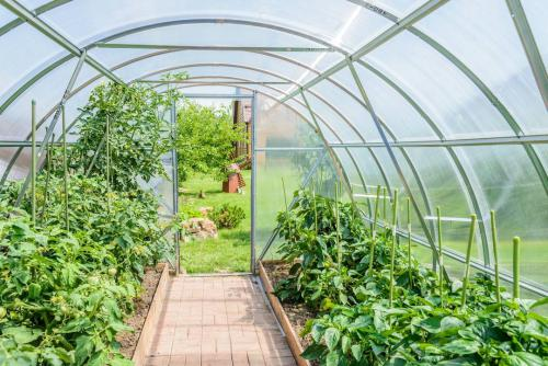 Inside a polytunnel with plants